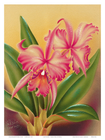 Cattleya, Pink Orchid Tropical Flowers Poster by Frank Oda