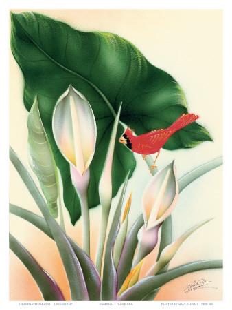 Hawaiian Red Cardinal, c.1940s Posters by Frank Oda
