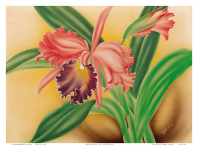 Pink Cattleya Orchid Posters by Moki Hana