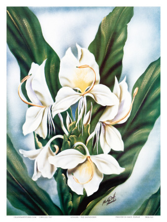 Hawaiian White Ginger, c.1940s Posters by Ted Mundorff