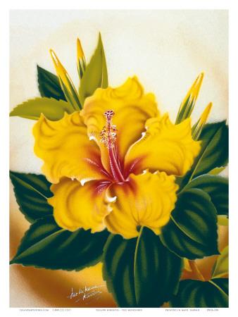 Hawaiian Yellow Hibiscus, c.1940s Art by Ted Mundorff