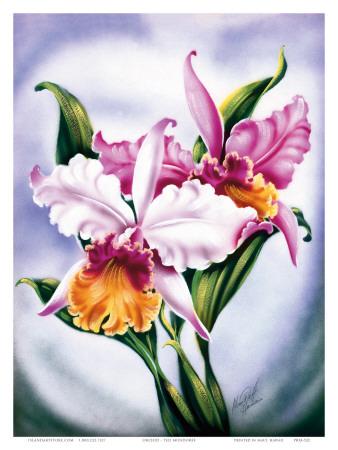 Hawaiian Pink Orchid, c.1940s Art by Ted Mundorff