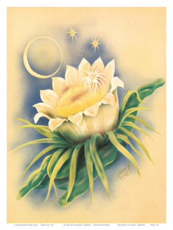 Hawaii Night Blooming Cereus, c. 1940s Posters by Ted Mundorff