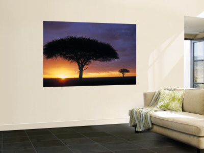 Acacia Tree at Sunrise, Serengeti National Park, Tanzania Mural
