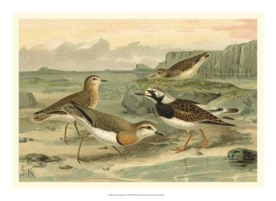 Shore Gathering I Giclee Print by Franz Eugen Kohler