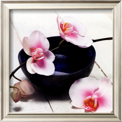 Orchid in a Bowl Posters by Stephane De Bourgies