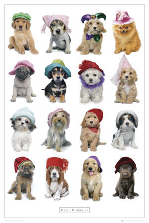 Puppies in Hats Affiche