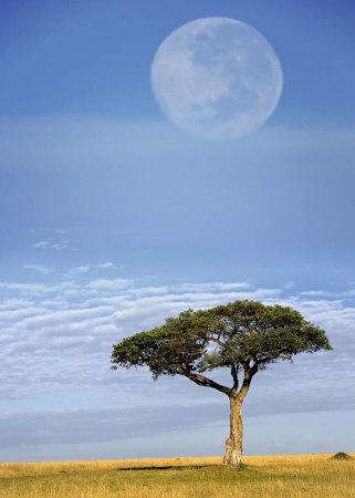 Full Moon, Masai Mara, Kenya Poster by Adam Jones