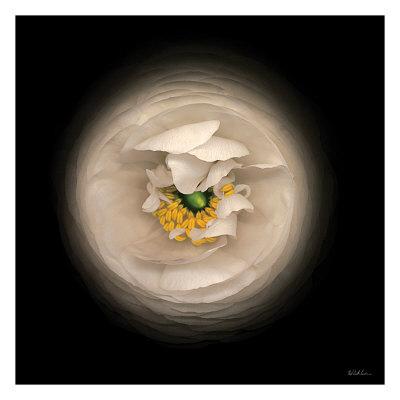 Ranunculus no. 15 Art by Neil Seth Levine