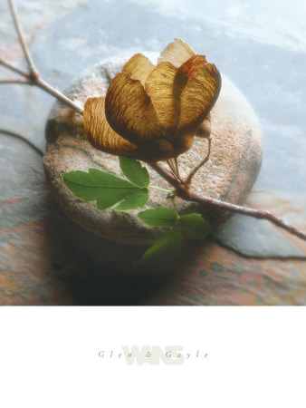 Branch on Stone Posters by Glen & Gayle Wans