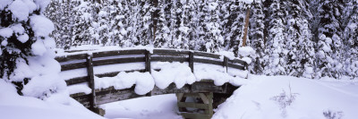 Snow Covered Footbridge in a Forest, Banff National Park, Alberta, Canada Photographic Print by  Panoramic Images