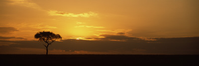 Sunrise over a Landscape, Masai Mara National Reserve, Kenya Photographic Print by  Panoramic Images