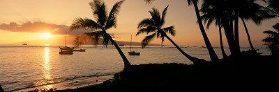 Silhouette of Palm Trees at Dusk, Lahaina, Maui, Hawaii, USA Photographic Print by  Panoramic Images