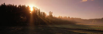 Early Morning Sun over Forest and Fields Sweden Photographic Print by  Panoramic Images