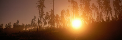 Sunrise and Morning Mist Sweden Photographic Print by  Panoramic Images