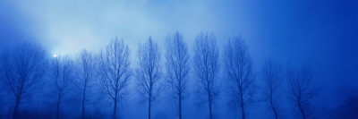Trees in Fog Damme Belgium Photographic Print by  Panoramic Images