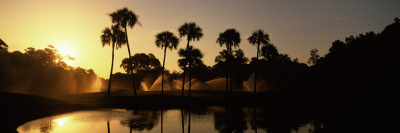 Silhouette of Palm Trees at Sunrise in a Golf Course, Kiawah Island Golf Resort, Kiawah Island Photographic Print by  Panoramic Images