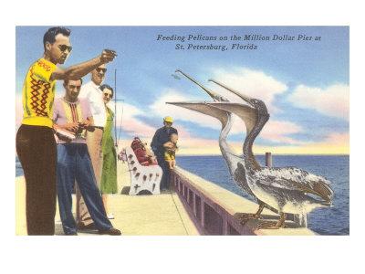 Feeding Pelicans, St. Petersburg, Florida Print