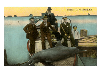 Porpoise on Boat, St. Petersburg, Florida Posters