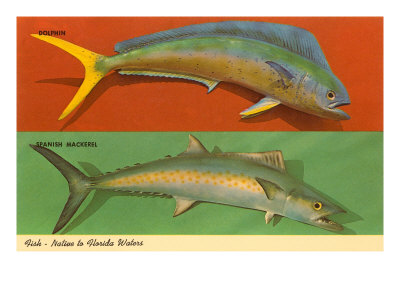 Fish Native to Florida Waters Posters