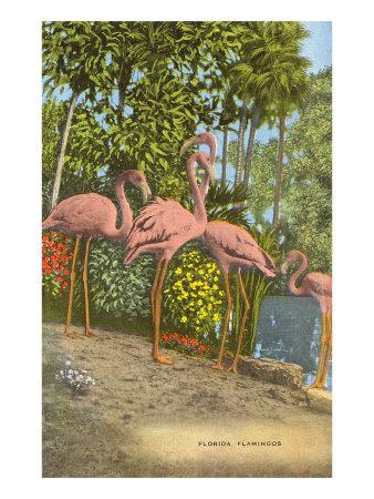 Flamingos, Florida Posters