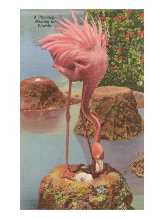 Flamingo Nesting in Florida Poster