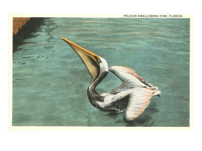 Pelican, Florida Posters