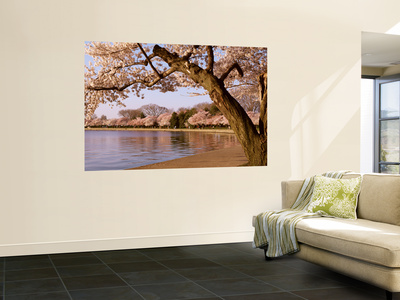 Cherry Blossom Tree along a Lake, Potomac Park, Washington D.C., USA Wall Mural