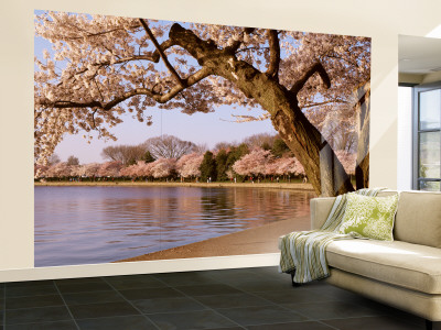 Cherry Blossom Tree along a Lake, Potomac Park, Washington D.C., USA Wall Mural – Large