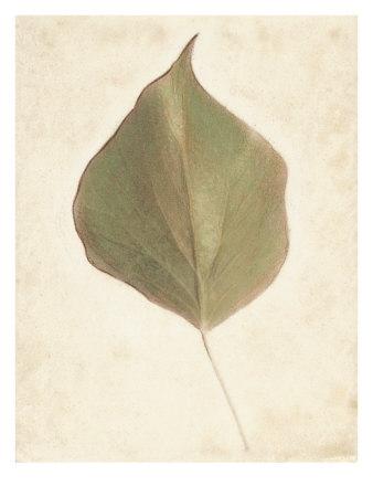 Single Leaf Prints by Amy Melious