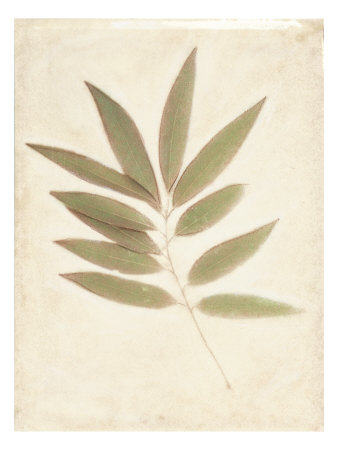 Bay Leaves Art by Amy Melious