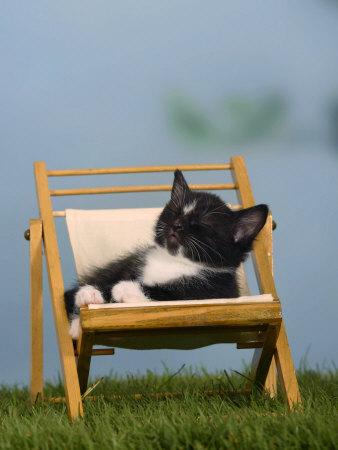 Domestic Cat, Kitten Sleeping on a Deckchair Photographic Print by Petra Wegner