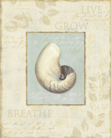 Soothing Words Shells II Art Print