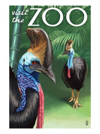 Cassowary - Visit the Zoo, c.2009 Prints by  Lantern Press