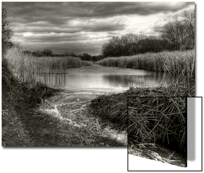 Reeds in Winter Art by Stephen Arens