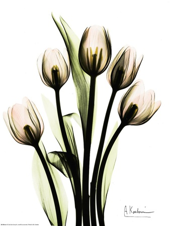 Crystal Flowers, Tulip Bouquet Art Print