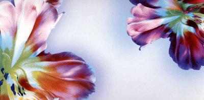 Floral Fantasy I Posters by Frauke Meszaros