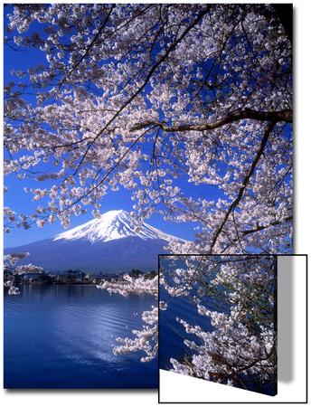 Cherry Blossoms and Mt. Fuji Art