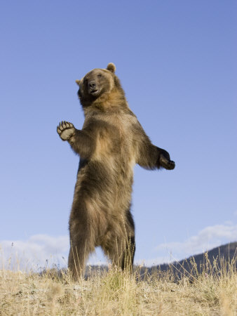 Put up with bear stand