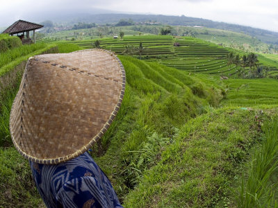 An Indonesian Worker Looks Out over Terraced Rice Paddies in the Interior of Bali, Indonesia Photographic Print by David Fleetham