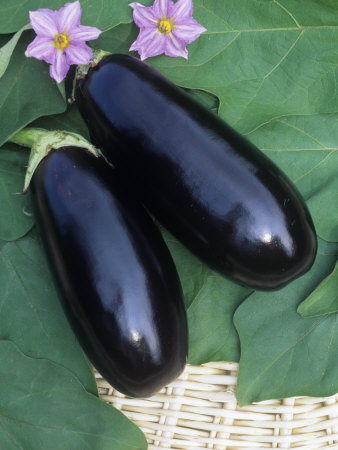 Eggplant, Dusky Hybrid Photographic Print by Wally Eberhart