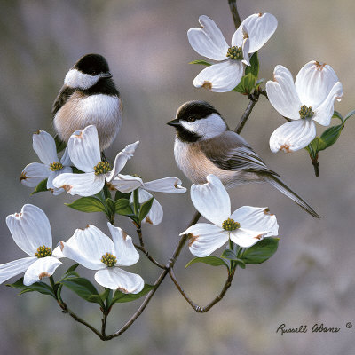 Chickadee Kunsttryk