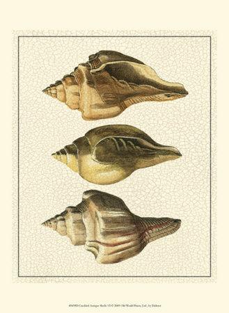 Crackled Antique Shells VI Art by Denis Diderot