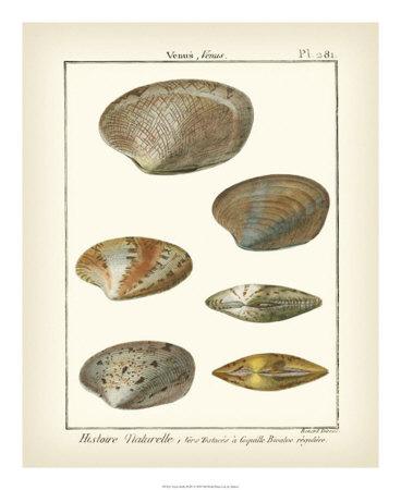 Venus Shells, Pl.281 Giclee Print by Denis Diderot