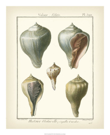 Volute Shells, Pl.390 Giclee Print by Denis Diderot