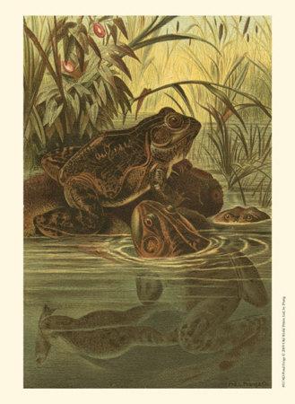 Pond Frogs Print by Louis Prang