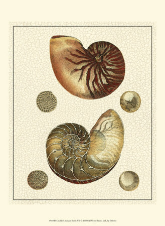 Crackled Antique Shells VII Posters by Denis Diderot