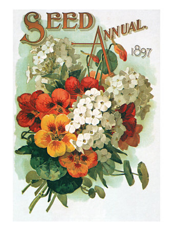 Pansies and White Flowers Giclee Print