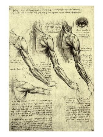 Studies of Human Arm Giclee Print by  Leonardo da Vinci