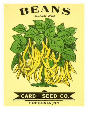 Beans Seed Packet Giclee Print